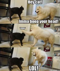 Dog bops cat on the head